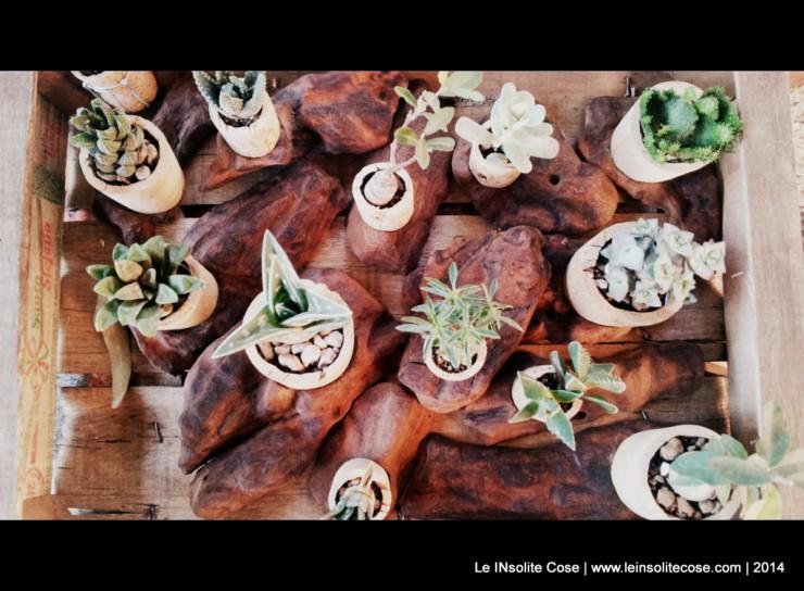 Piante Grasse in Tappo di sughero su corteccia di legno intagliato - Le inSolite Cose 2014 (3)