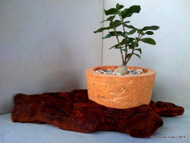 Confezioni Per Piante Grasse ~ Idee per il design della casa