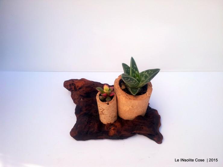 Piante grasse in tappi di sughero su corteccia di legno del mare - le INsolite Cose 2015 (4)