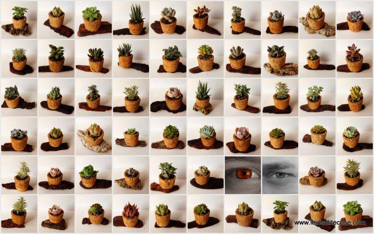 piante-grasse-in-tappo-di-sughero-su-corteccia-www-leinsolitecose-com-le-insolite-cose
